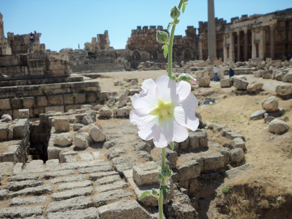 Flower at Baalbek